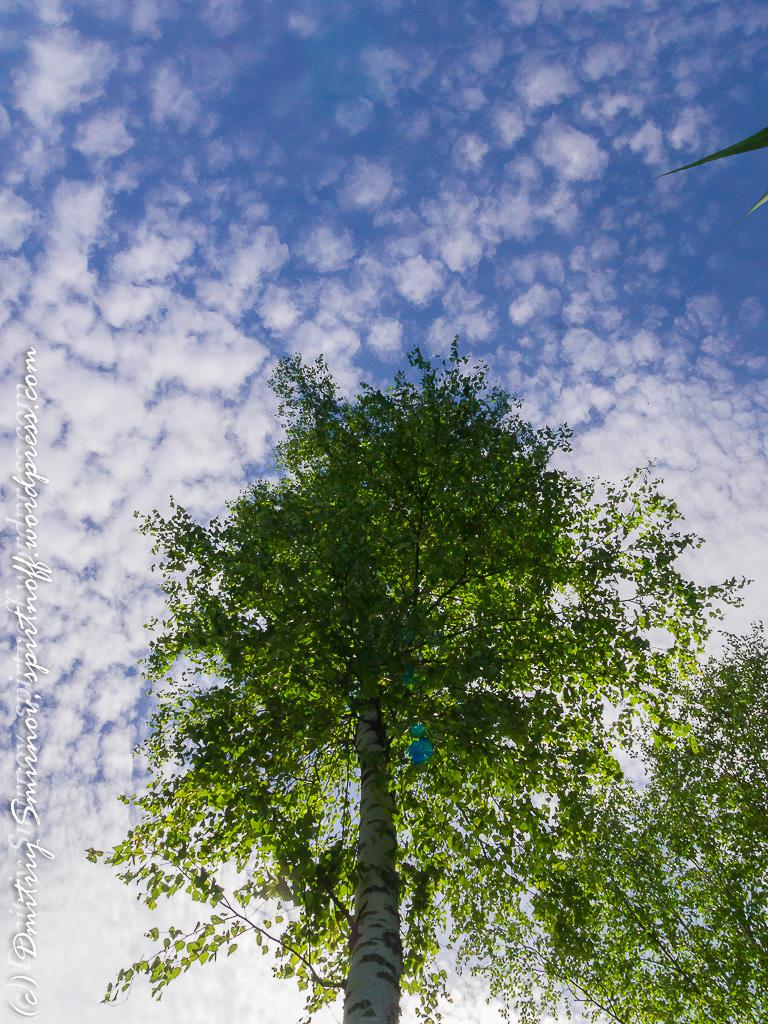 blog-1-of-151 Просто фото  Лосиный остров. Съемка природы во время пикника.