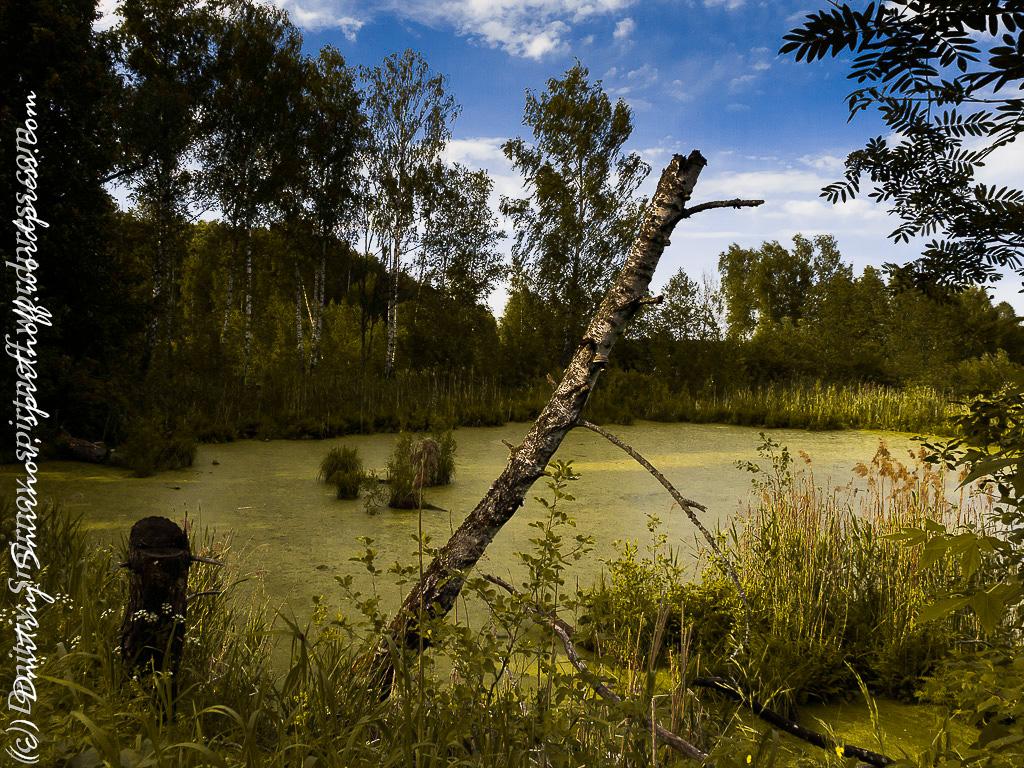 blog-12-of-151 Просто фото  Лосиный остров. Съемка природы во время пикника.