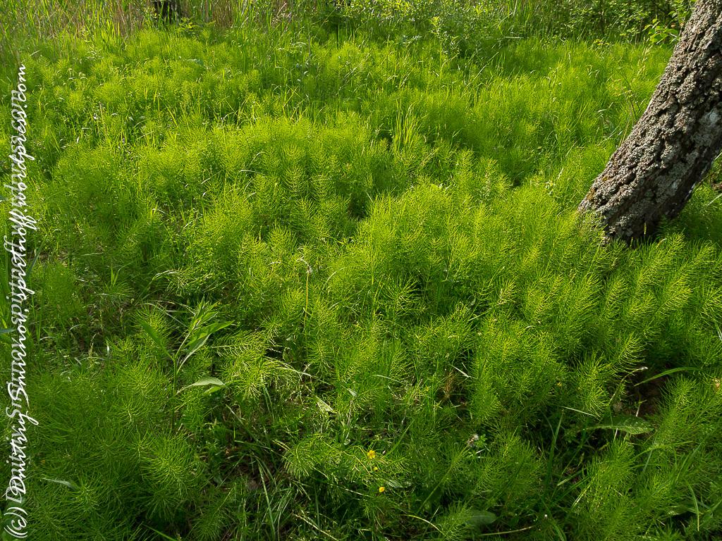 Просто фото  Лосиный остров. Съемка природы во время пикника.