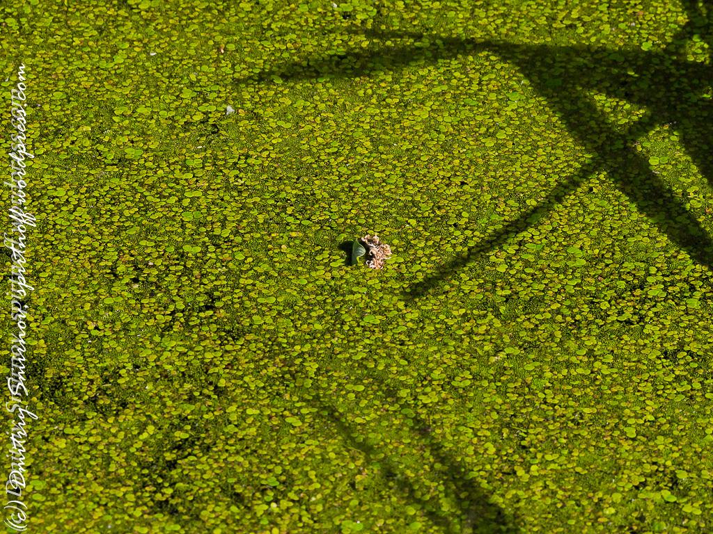 blog-7-of-151 Просто фото  Лосиный остров. Съемка природы во время пикника.
