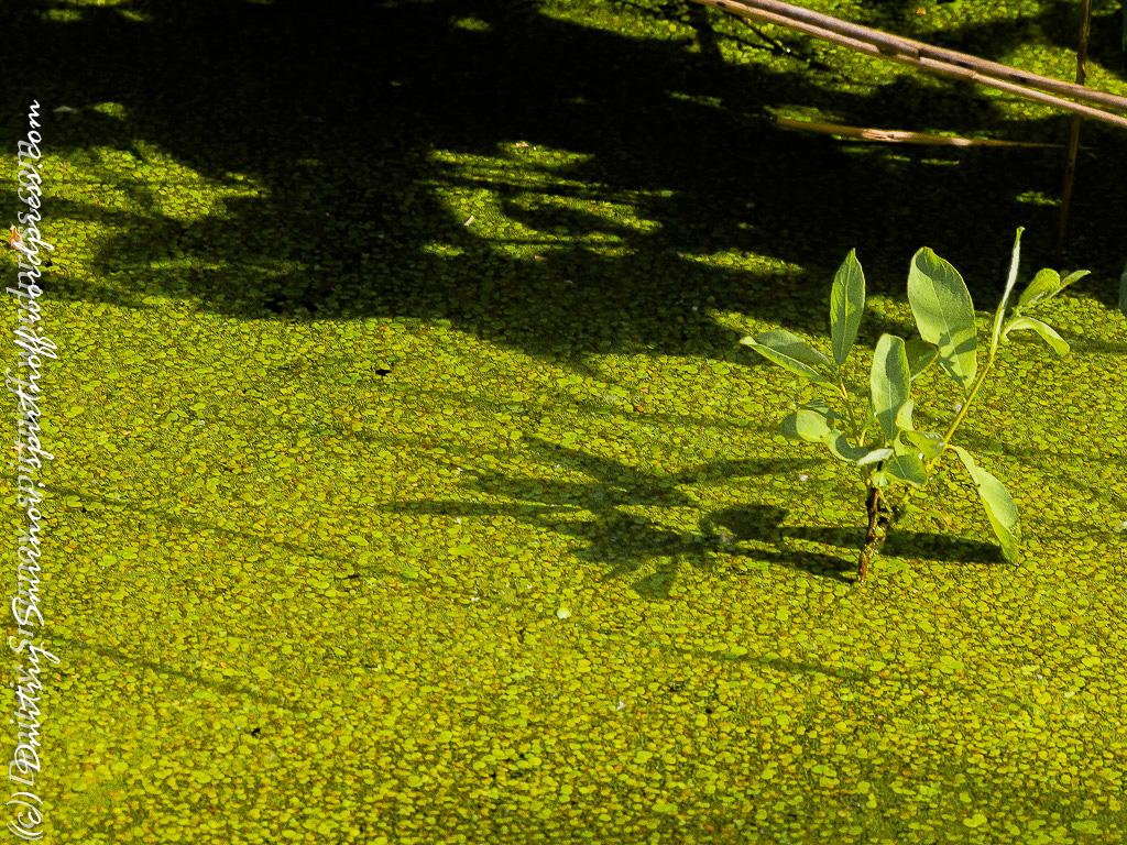 blog-8-of-151 Просто фото  Лосиный остров. Съемка природы во время пикника.