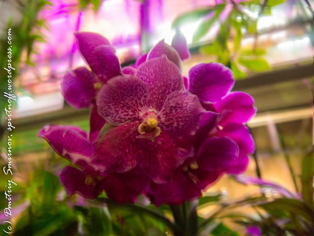 103 Просто фото  «Аптекарский огород» (Ботанический сад МГУ ). Часть 2