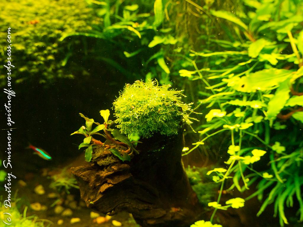 113 Просто фото  «Аптекарский огород» (Ботанический сад МГУ ). Часть 2