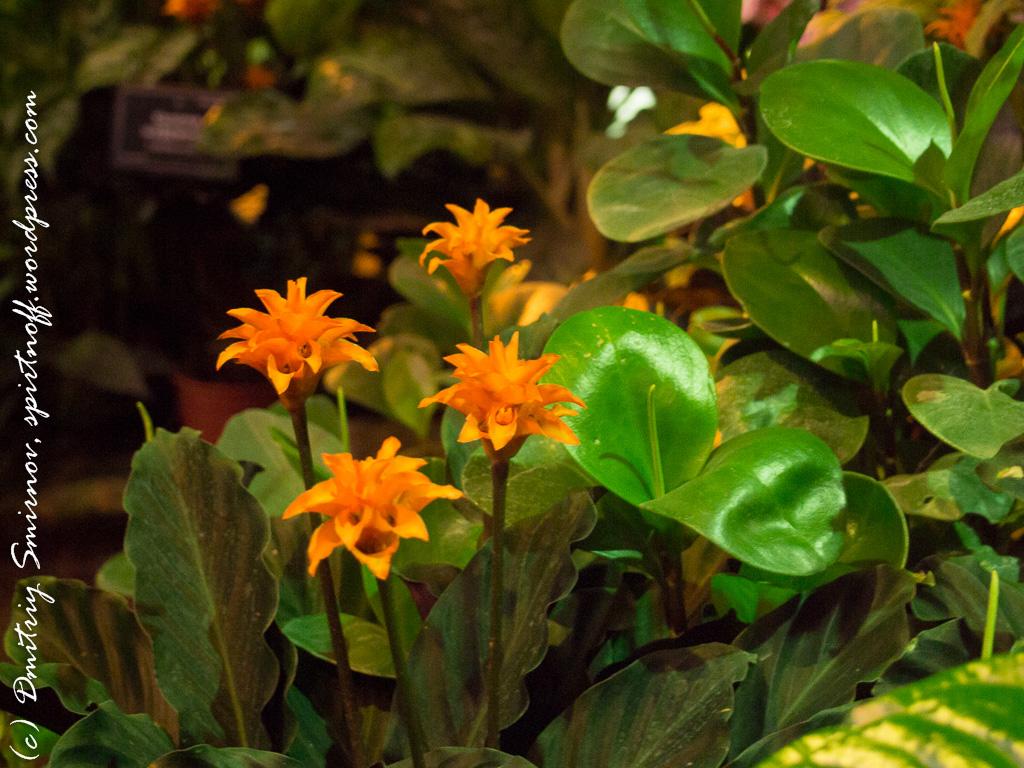 123 Просто фото  «Аптекарский огород» (Ботанический сад МГУ ). Часть 2