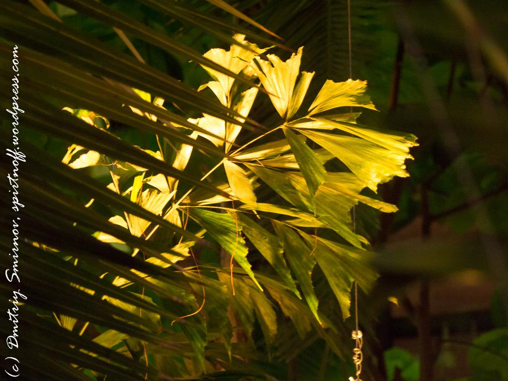 153 Просто фото  «Аптекарский огород» (Ботанический сад МГУ). Часть 1