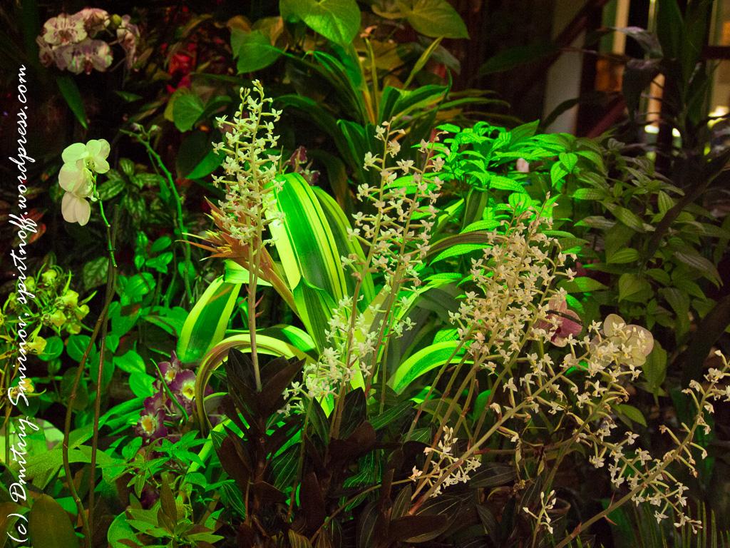 211 Просто фото  «Аптекарский огород» (Ботанический сад МГУ). Часть 1