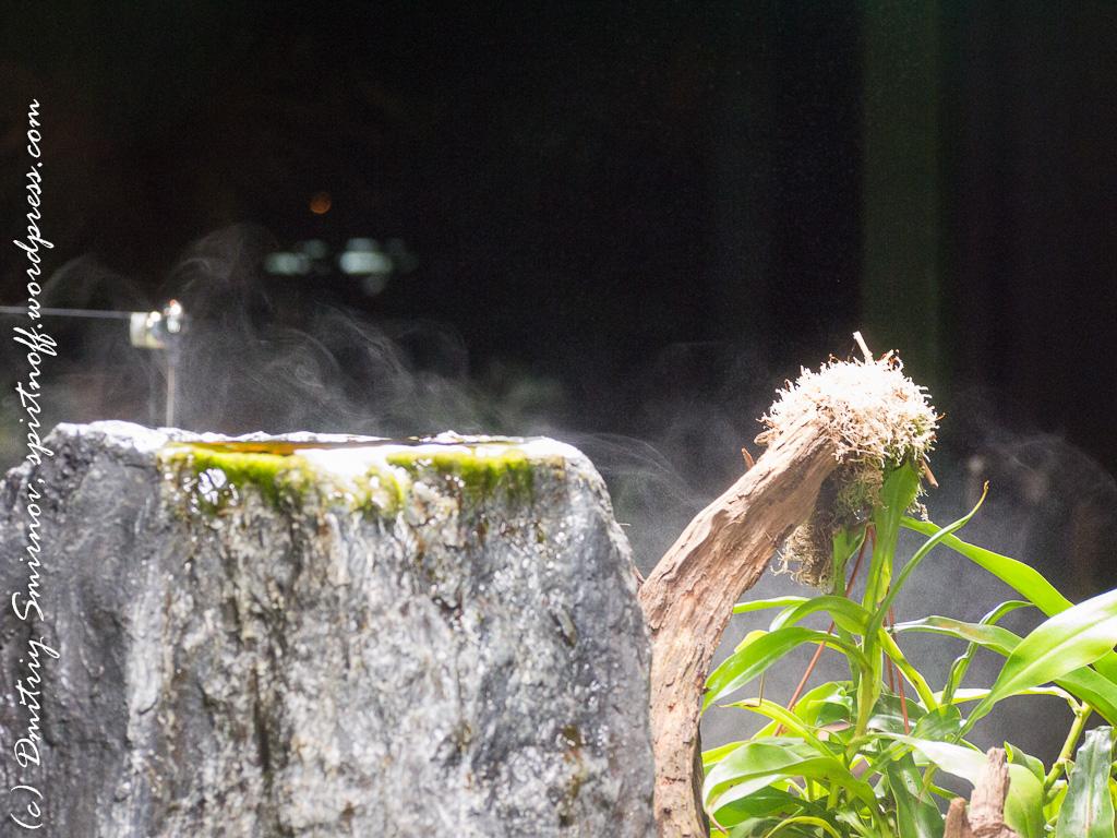 221 Просто фото  «Аптекарский огород» (Ботанический сад МГУ). Часть 1