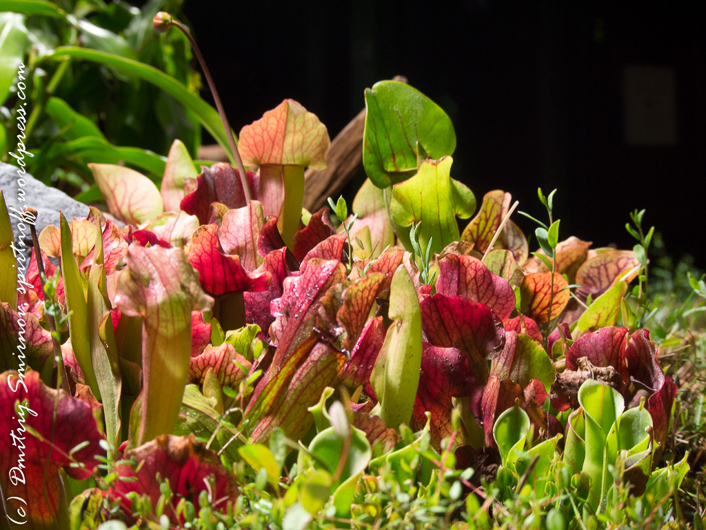 231 Просто фото  «Аптекарский огород» (Ботанический сад МГУ). Часть 1