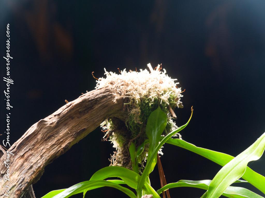 24 Просто фото  «Аптекарский огород» (Ботанический сад МГУ). Часть 1
