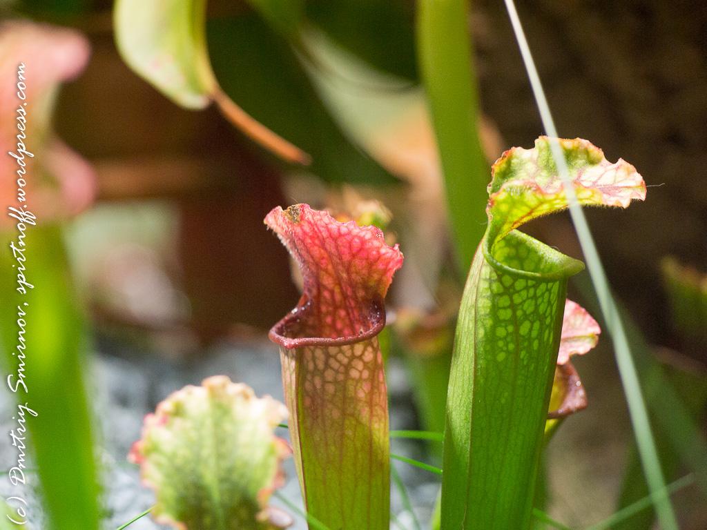27 Просто фото  «Аптекарский огород» (Ботанический сад МГУ). Часть 1