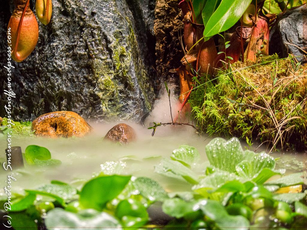 28 Просто фото  «Аптекарский огород» (Ботанический сад МГУ). Часть 1