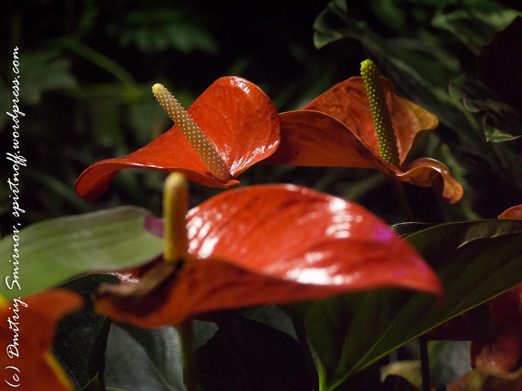 321 Просто фото  «Аптекарский огород» (Ботанический сад МГУ). Часть 1