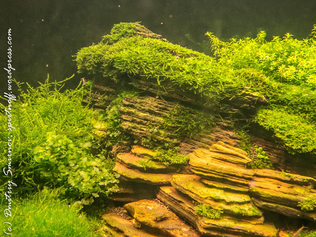 33 Просто фото  «Аптекарский огород» (Ботанический сад МГУ ). Часть 2