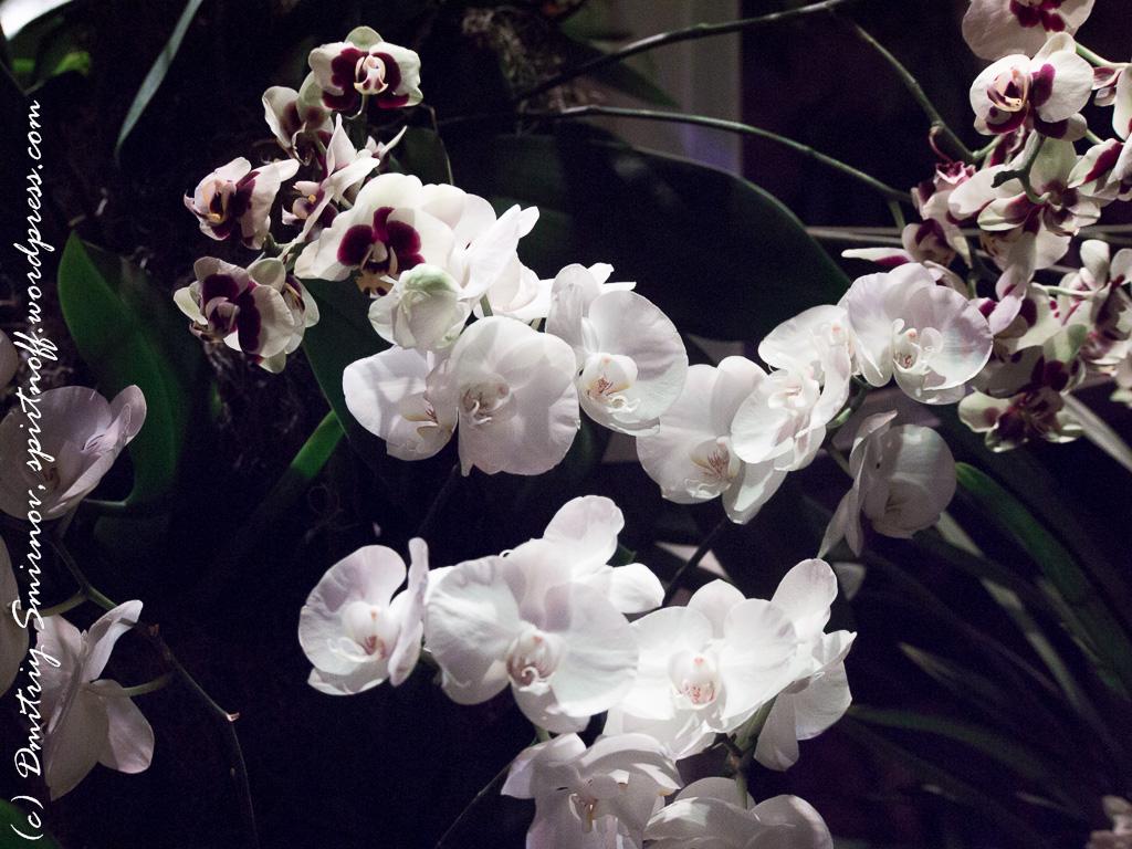 34 Просто фото  «Аптекарский огород» (Ботанический сад МГУ). Часть 1