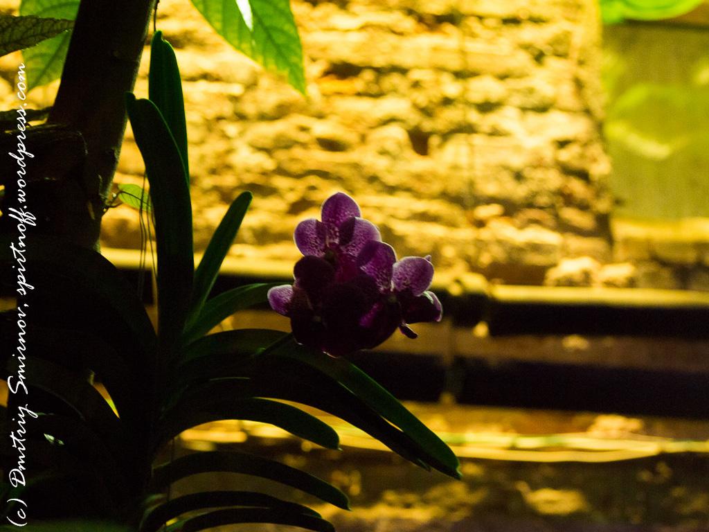 35 Просто фото  «Аптекарский огород» (Ботанический сад МГУ). Часть 1
