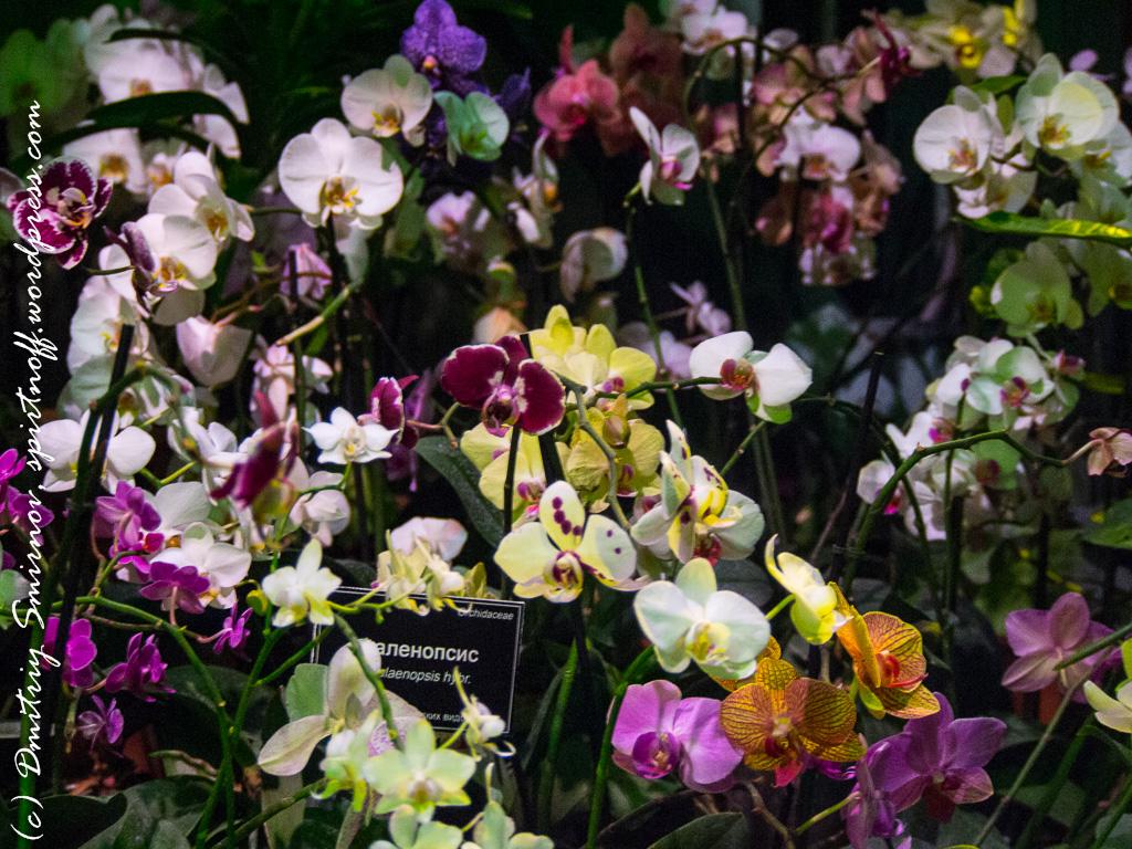 36 Просто фото  «Аптекарский огород» (Ботанический сад МГУ). Часть 1
