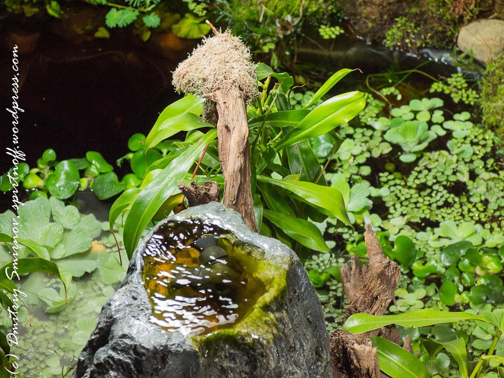 38 Просто фото  «Аптекарский огород» (Ботанический сад МГУ). Часть 1