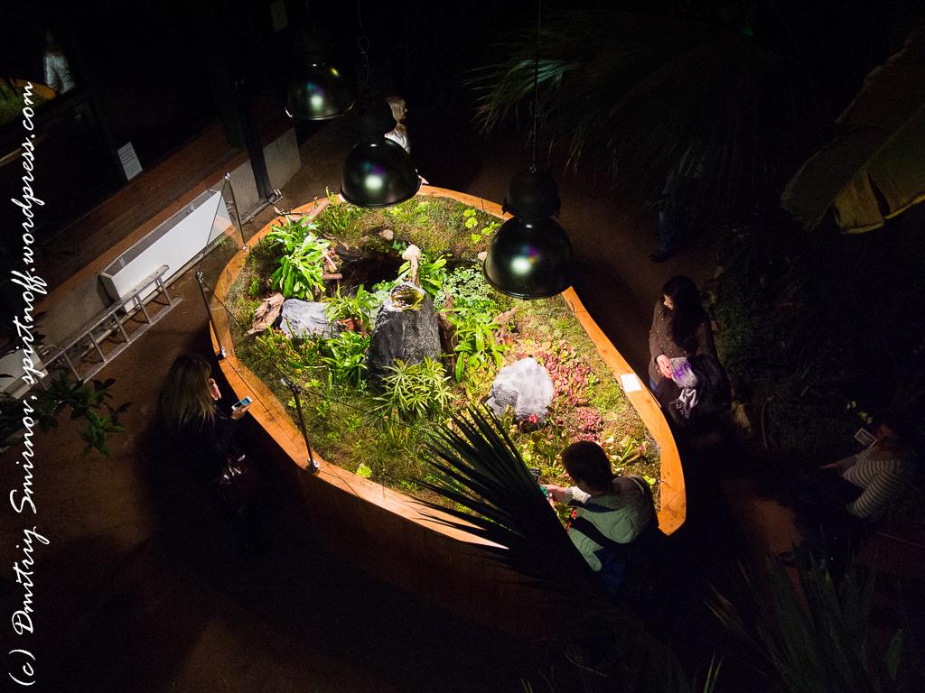 39 Просто фото  «Аптекарский огород» (Ботанический сад МГУ). Часть 1