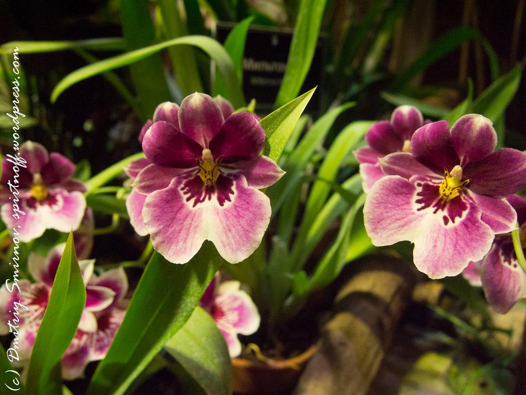 59 Просто фото  «Аптекарский огород» (Ботанический сад МГУ ). Часть 2
