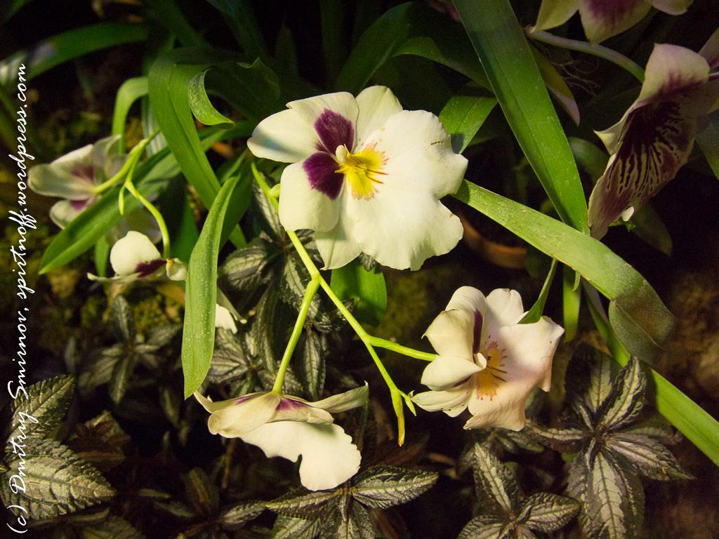 611 Просто фото  «Аптекарский огород» (Ботанический сад МГУ ). Часть 2