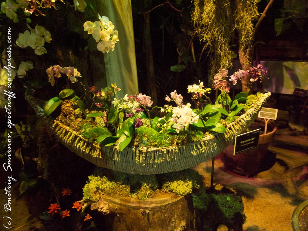 621 Просто фото  «Аптекарский огород» (Ботанический сад МГУ ). Часть 2