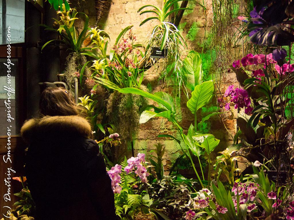 73 Просто фото  «Аптекарский огород» (Ботанический сад МГУ ). Часть 2
