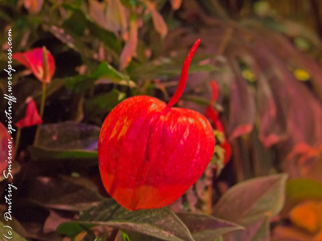 83 Просто фото  «Аптекарский огород» (Ботанический сад МГУ ). Часть 2
