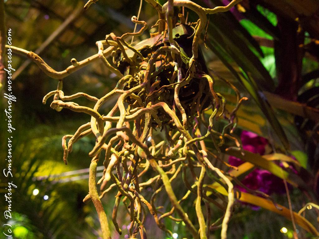 93 Просто фото  «Аптекарский огород» (Ботанический сад МГУ ). Часть 2
