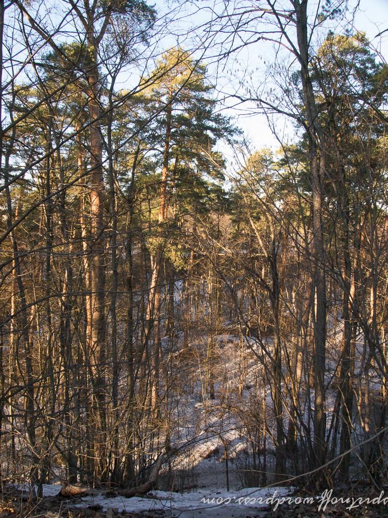blog-85-of-112-e1437402114374 Путешествия  Истра. Звенигород