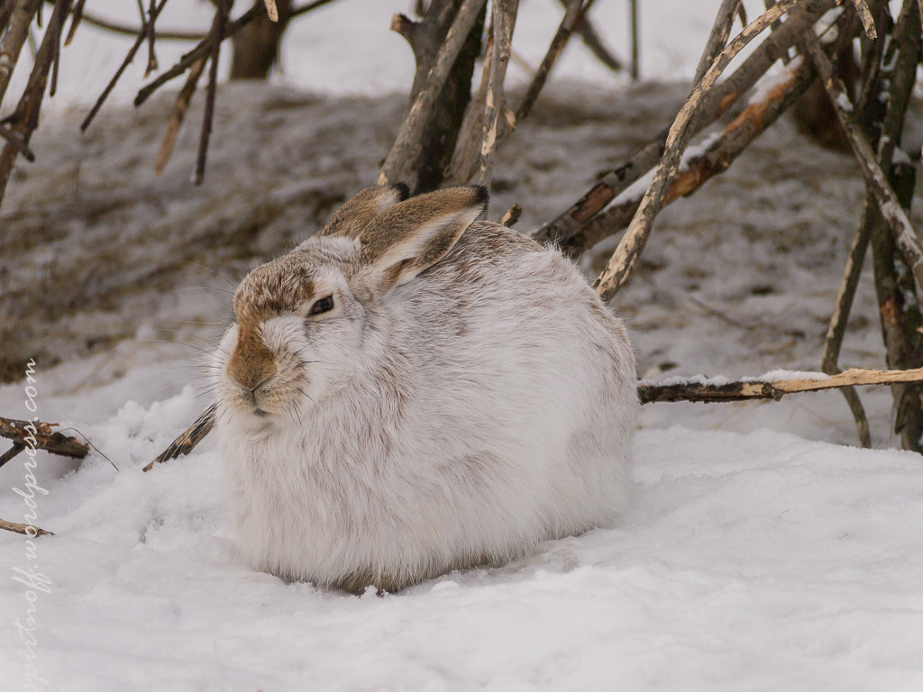 "blog-39-of-99 Просто фото  Парк птиц ""Воробьи"" (часть 2)"