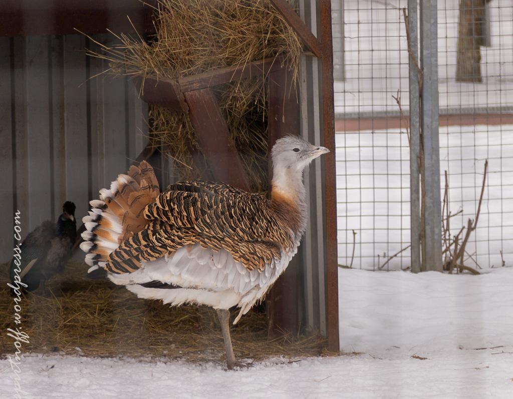 "blog-41-of-99 Просто фото  Парк птиц ""Воробьи"" (часть 2)"