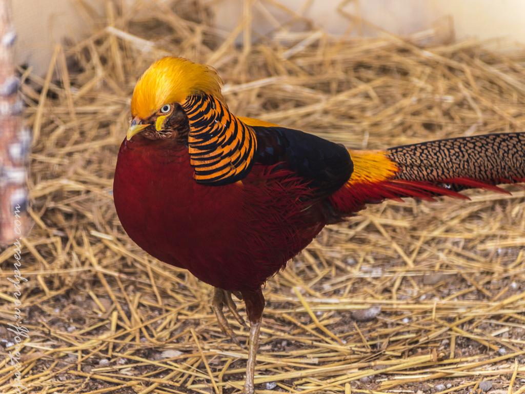 "blog-43-of-99 Просто фото  Парк птиц ""Воробьи"" (часть 2)"