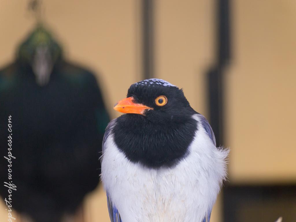 "blog-46-of-99 Просто фото  Парк птиц ""Воробьи"" (часть 2)"
