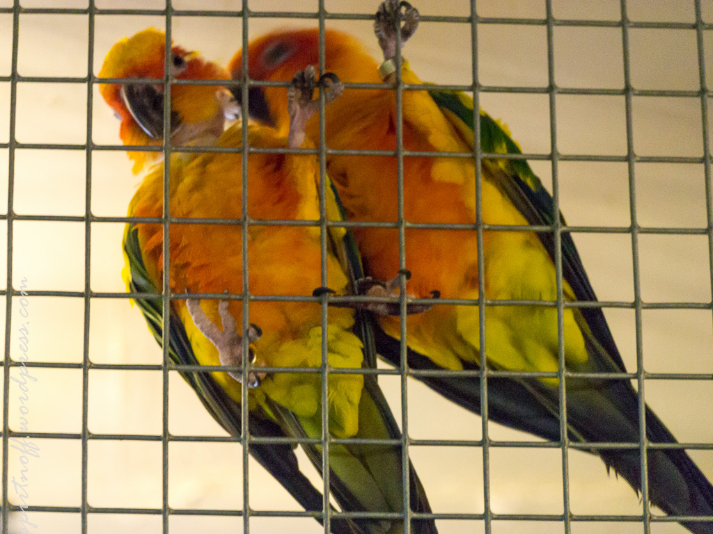"blog-61-of-99 Просто фото  Парк птиц ""Воробьи"" (часть 2)"