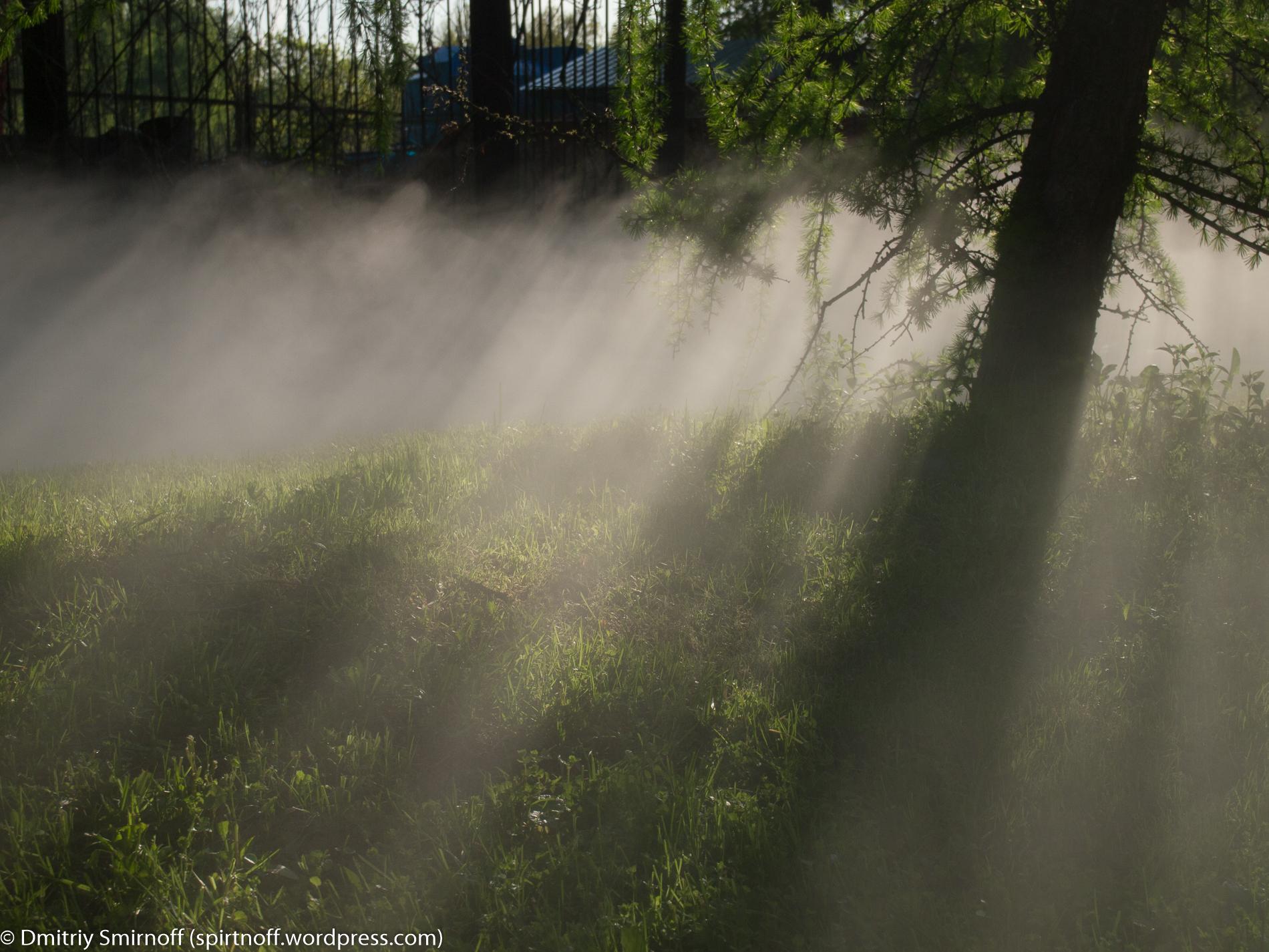 blog-3-of-23 Просто фото  Туман в Сокольниках