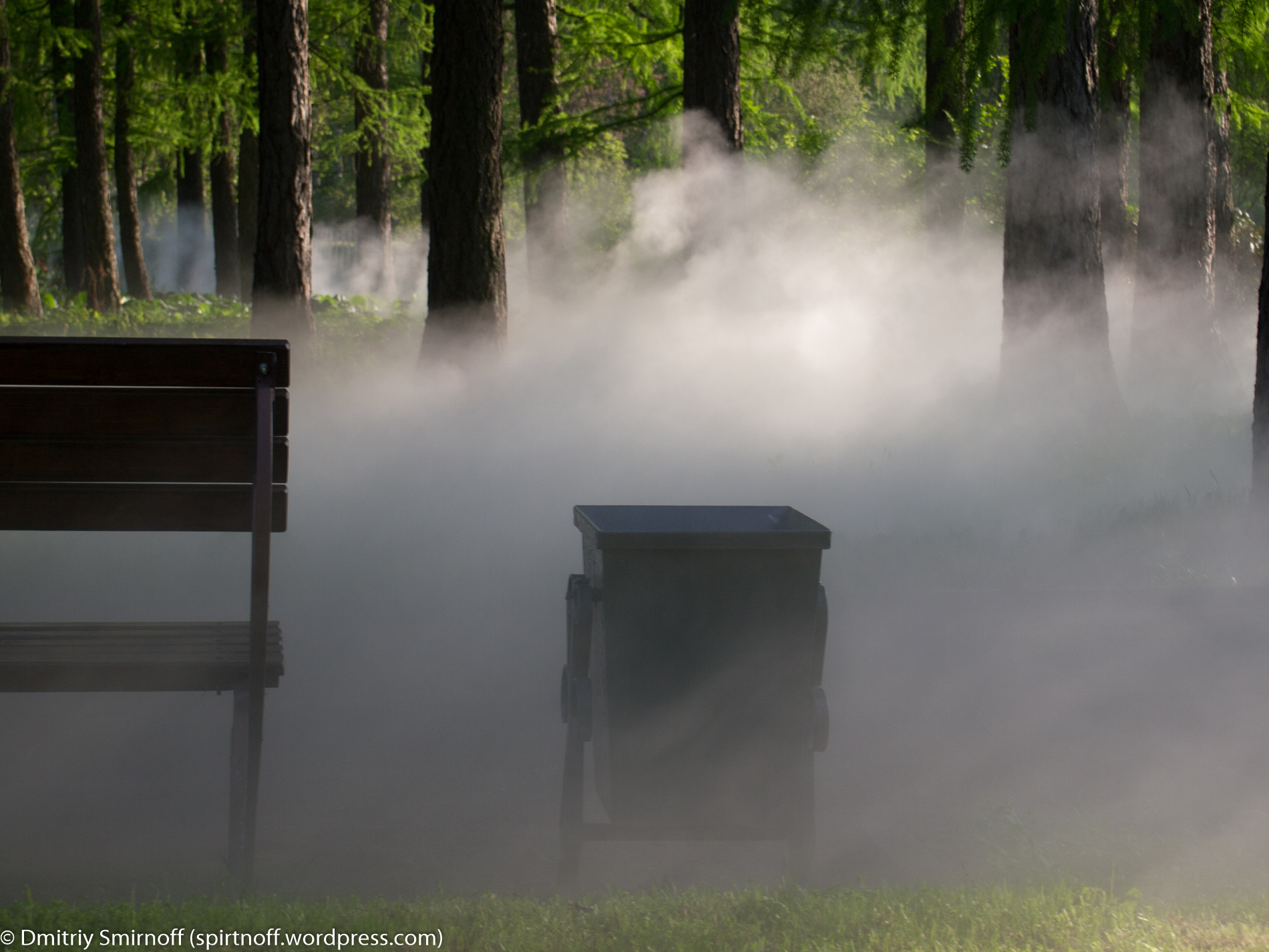 blog-4-of-23 Просто фото  Туман в Сокольниках