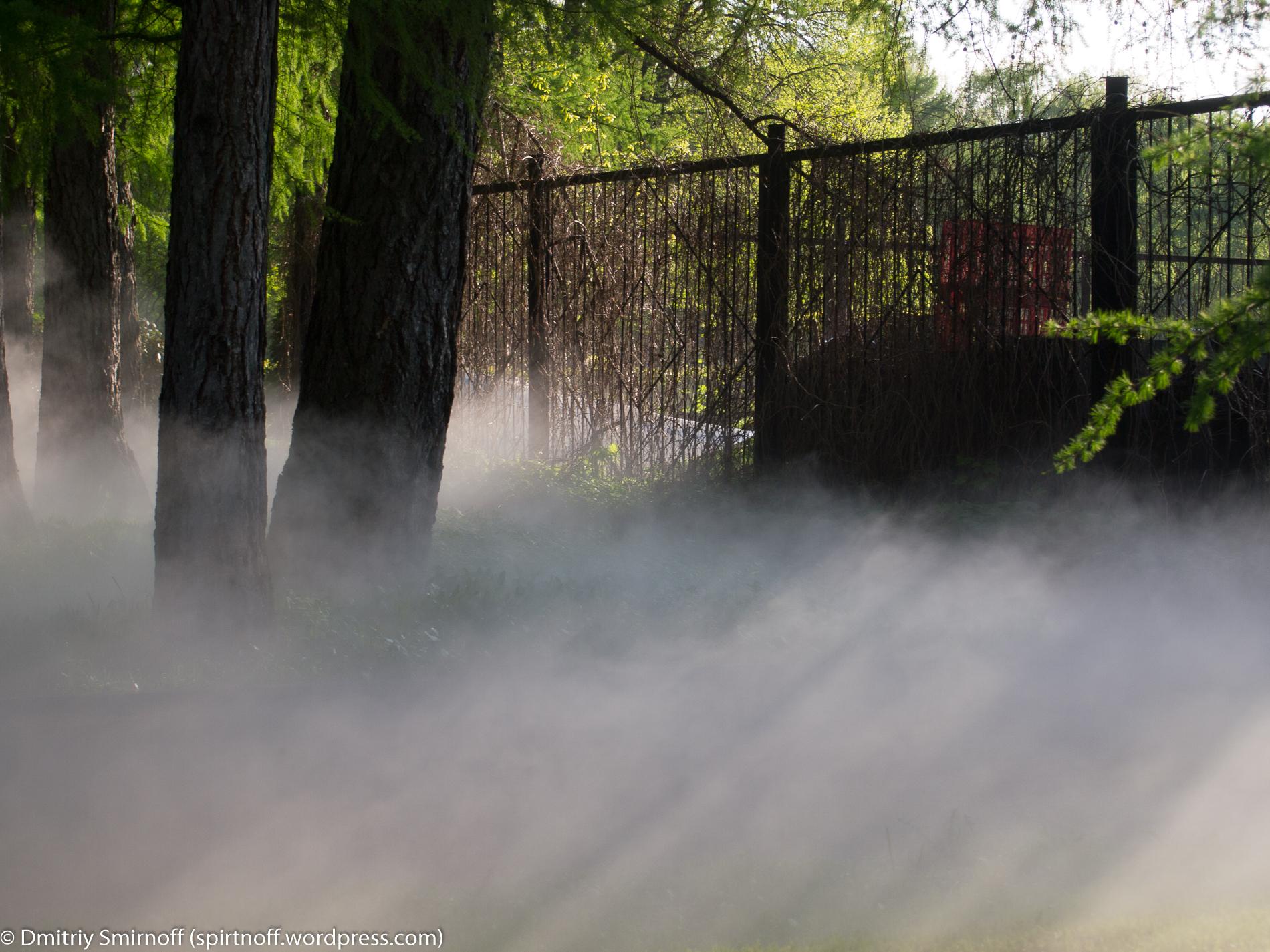 blog-5-of-23 Просто фото  Туман в Сокольниках