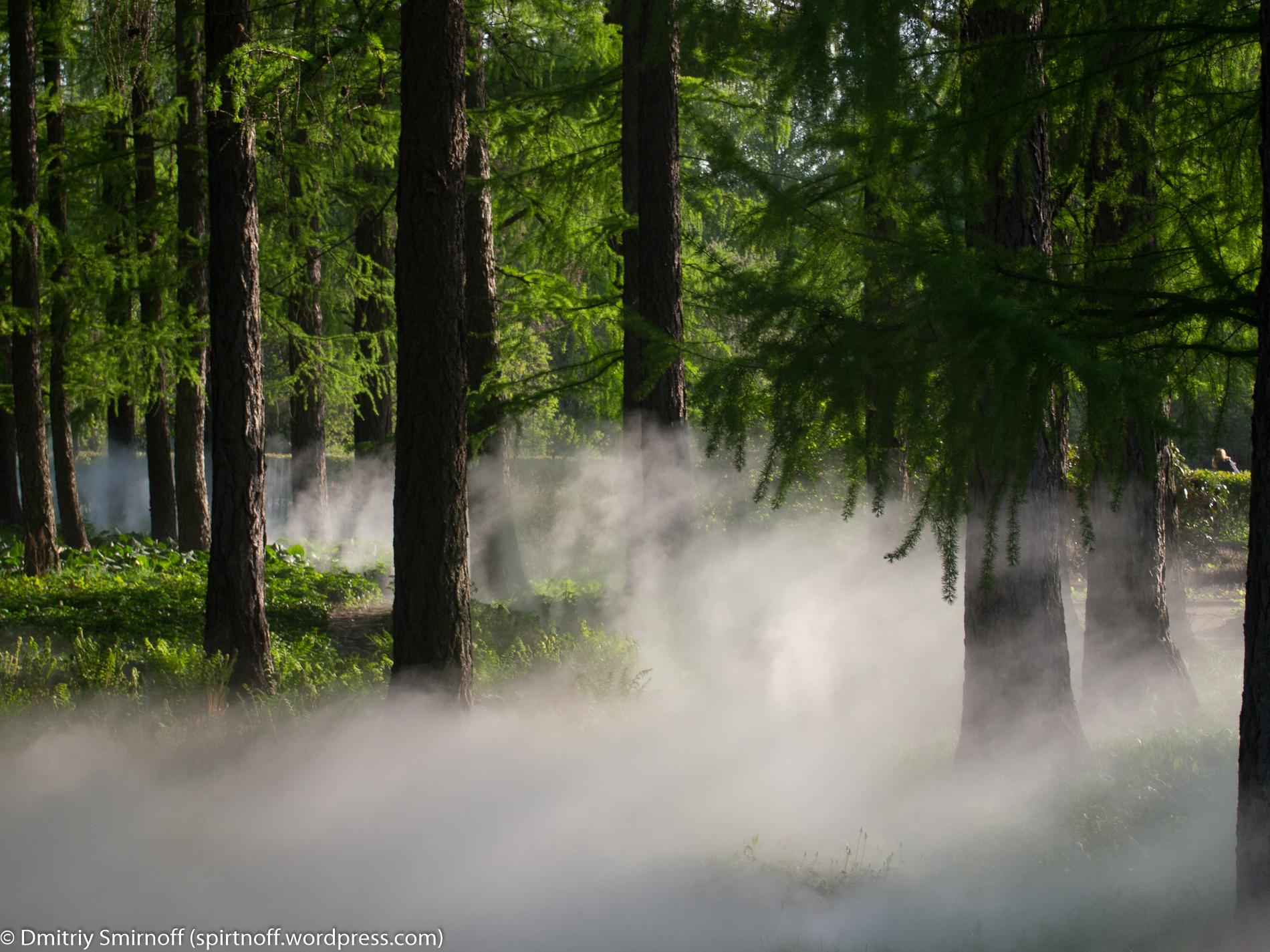 blog-6-of-23 Просто фото  Туман в Сокольниках