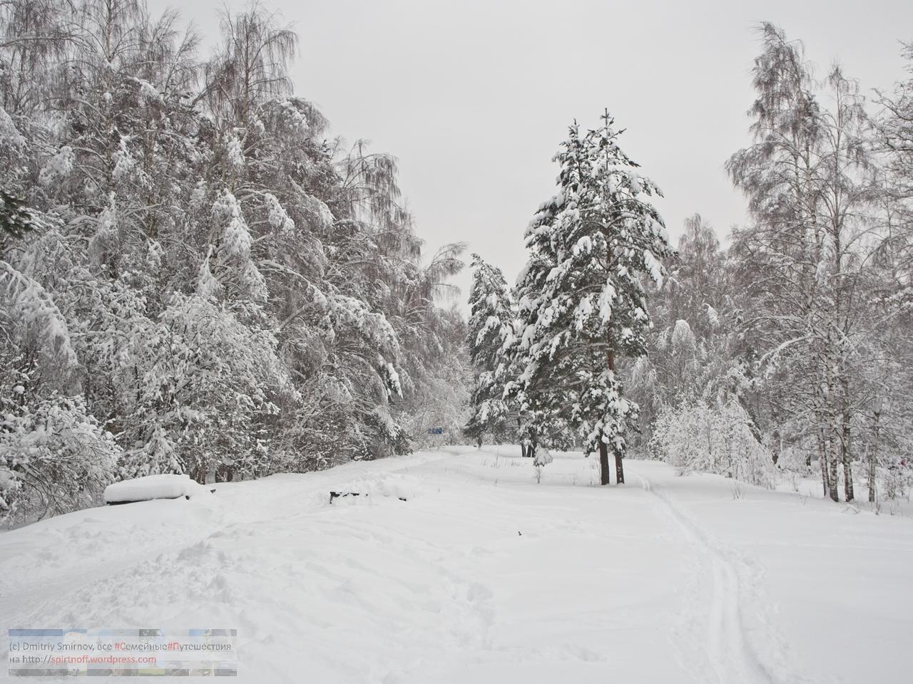 SMI00951-Blog-5 Просто фото  Зима в Лосином острове