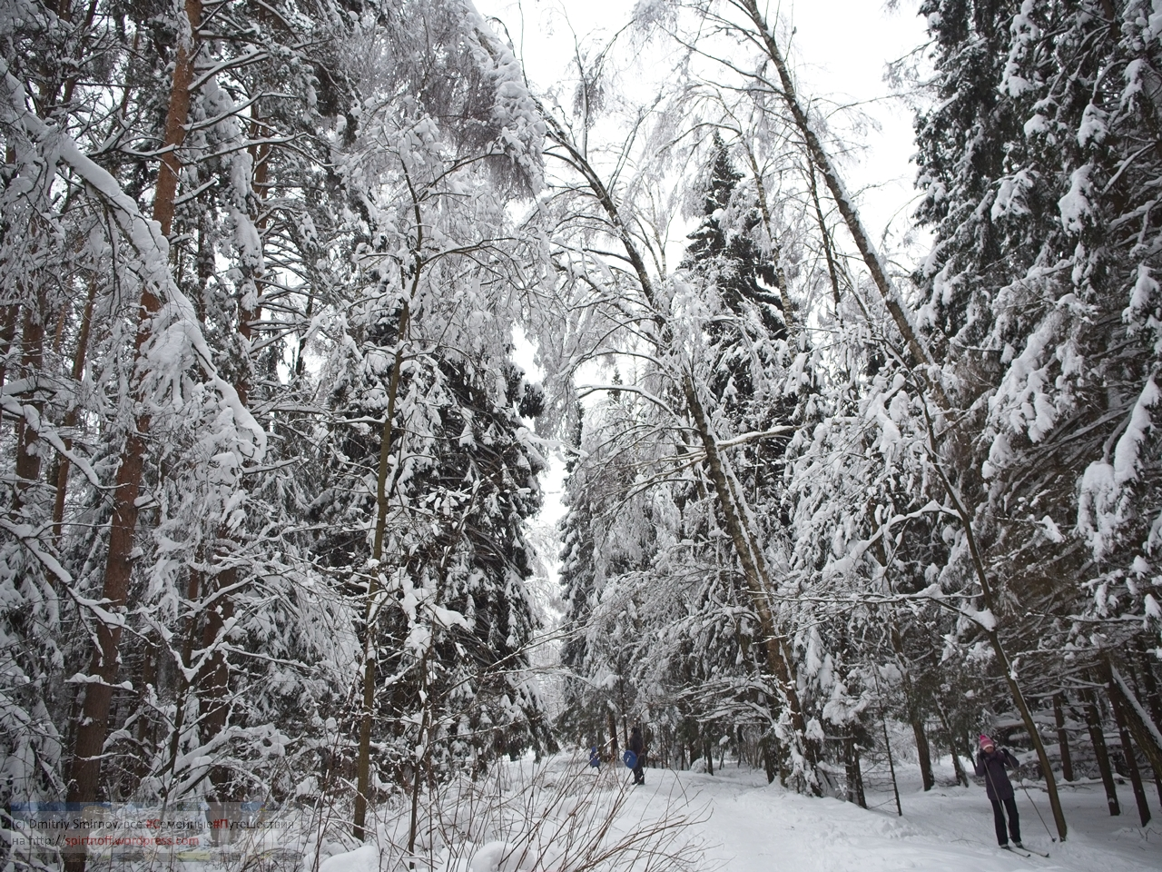 SMI00974-Blog-48 Просто фото  Зима в Лосином острове