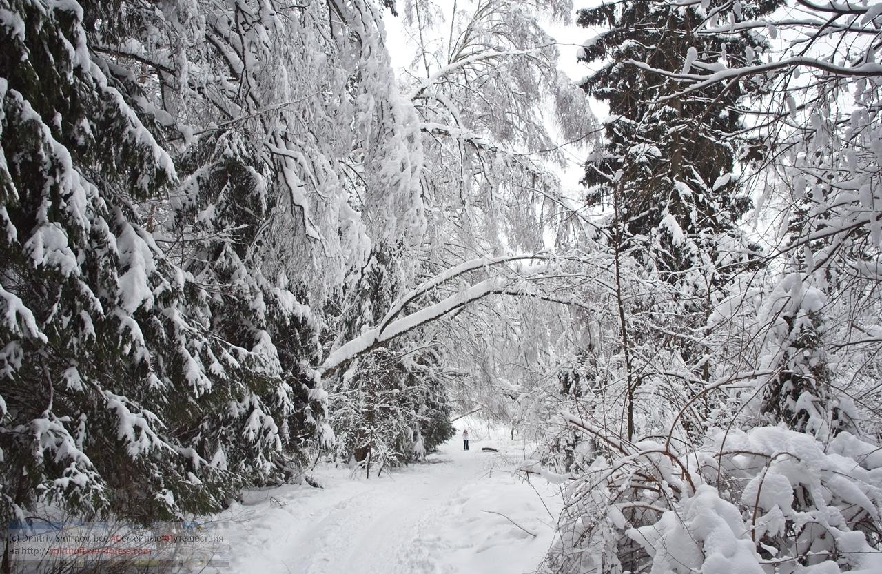SMI00981-Blog-20 Просто фото  Зима в Лосином острове