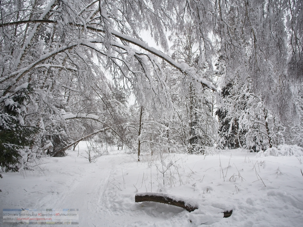 SMI00993-Blog-22 Просто фото  Зима в Лосином острове