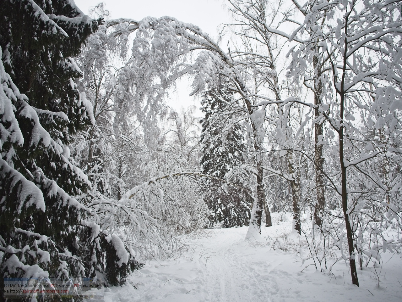SMI01029-Blog-38 Просто фото  Зима в Лосином острове