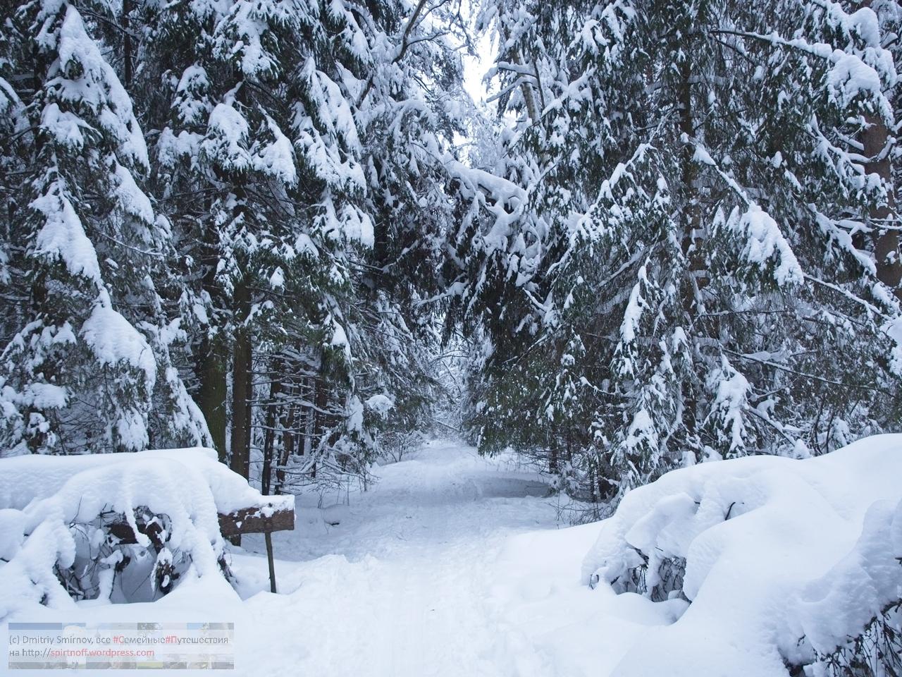 SMI01044-Blog-35 Просто фото  Зима в Лосином острове
