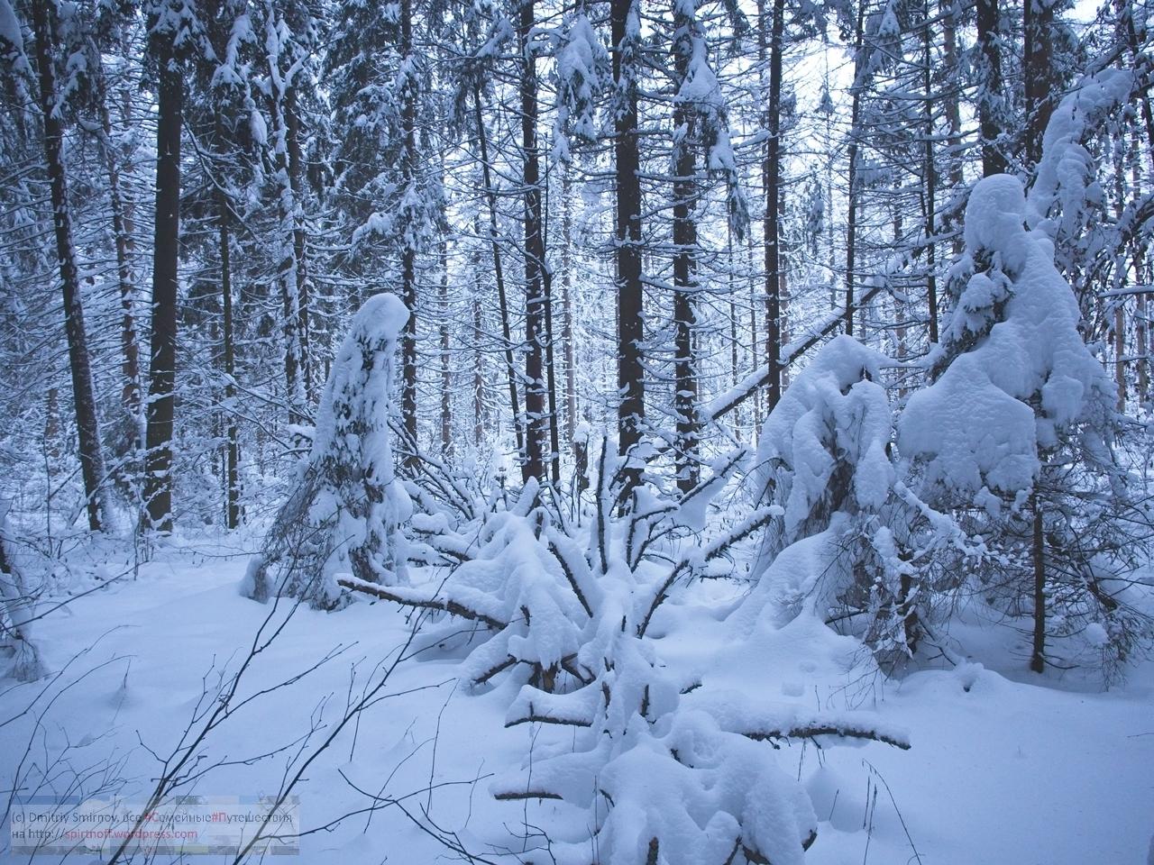 SMI01069-Blog-6 Просто фото  Зима в Лосином острове