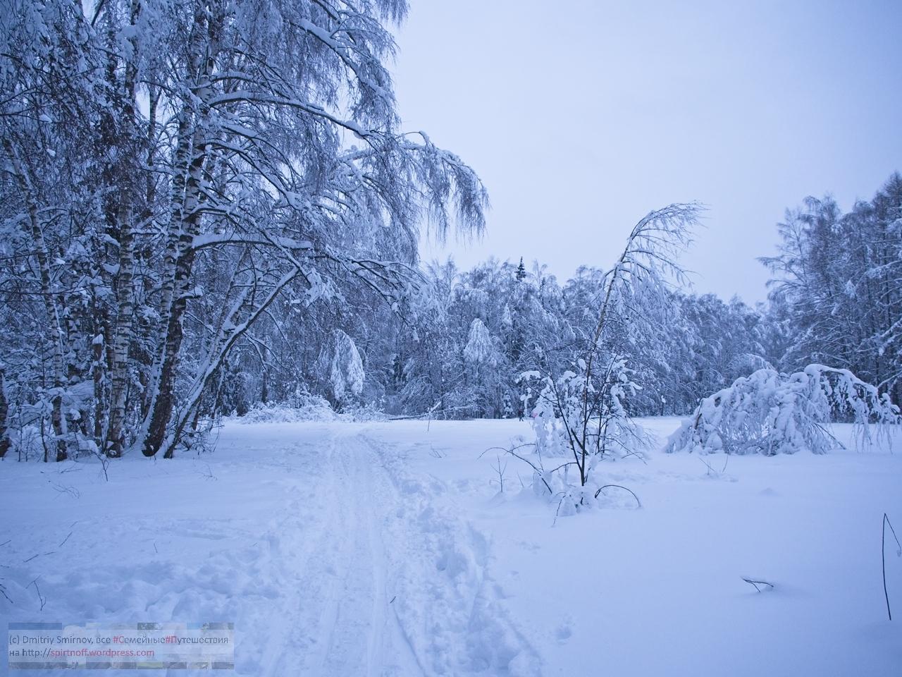 SMI01086-Blog-10 Просто фото  Зима в Лосином острове