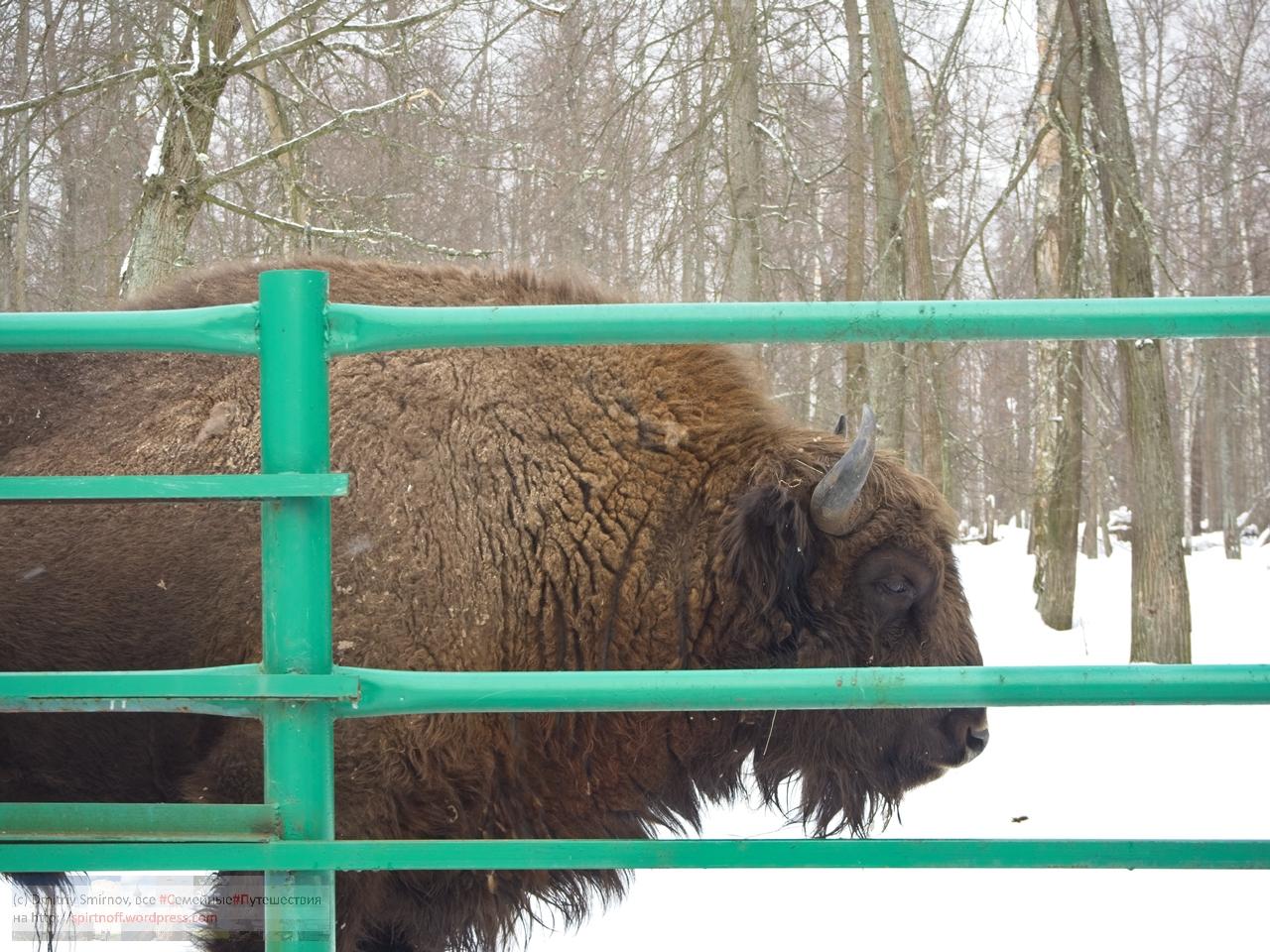 smi13807-blog-41 Путешествия  К зубрам в гости (Приокский террасный заповедник)
