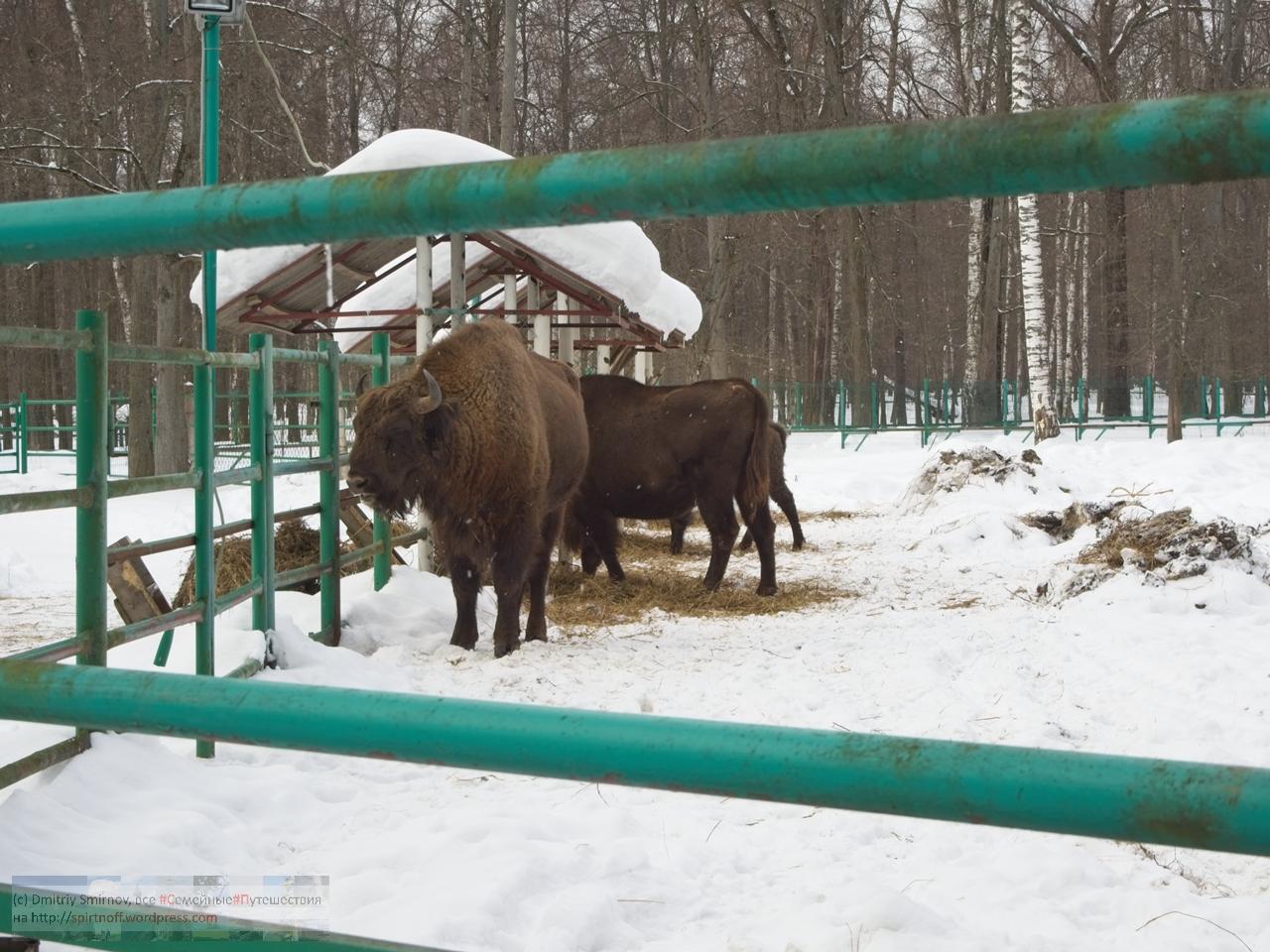 smi13838-blog-114 Путешествия  К зубрам в гости (Приокский террасный заповедник)