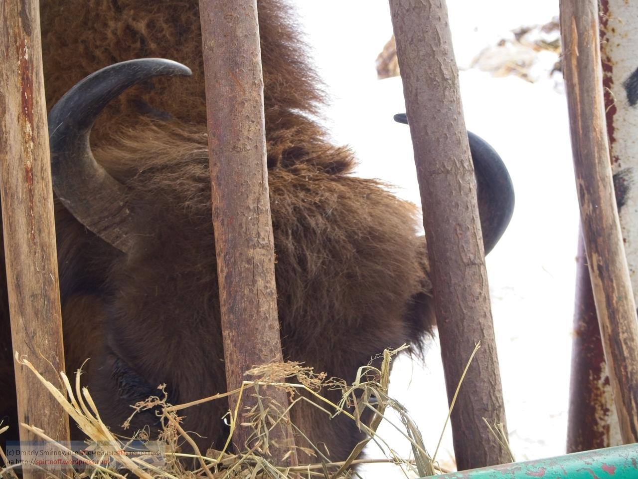 smi13847-blog-88 Путешествия  К зубрам в гости (Приокский террасный заповедник)