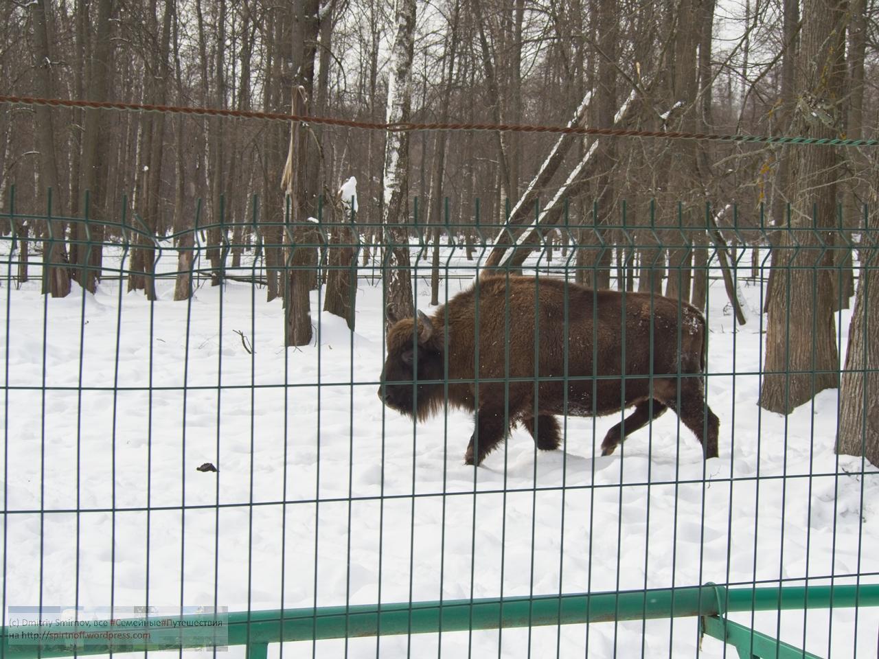 smi13940-blog-4 Путешествия  К зубрам в гости (Приокский террасный заповедник)